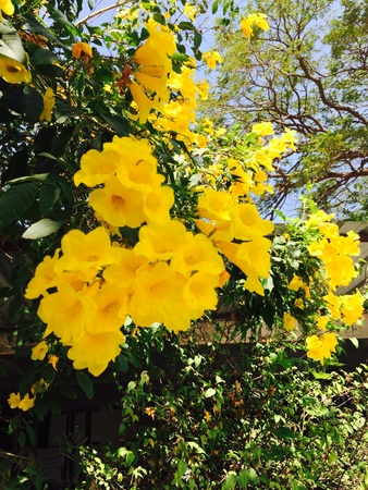 bright: Bright yellow flowers