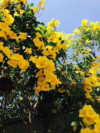 bright: Bright yellow flowers