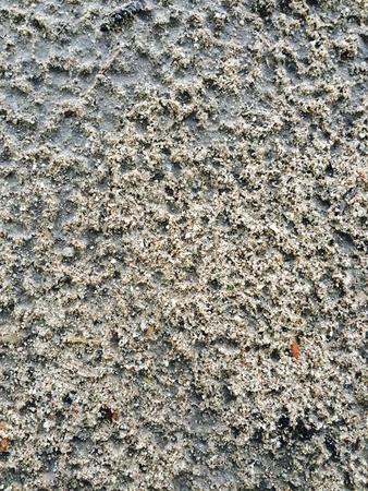 sandy soil: Background texture pattern of sandy soil