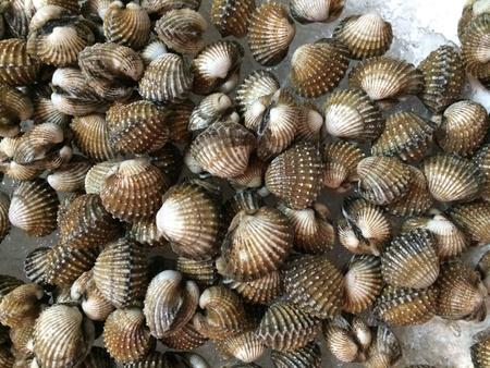 shellfish: Fresh shellfish cool on ice