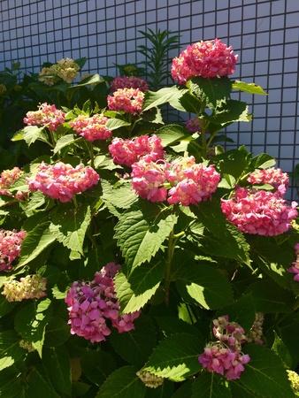 fleur de fleur dans le jardin