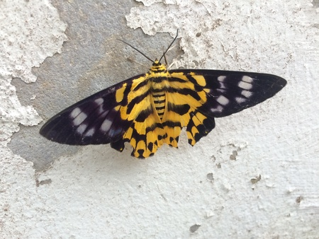 back: butterfly