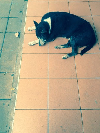 relent: The lonely dog sit on floor