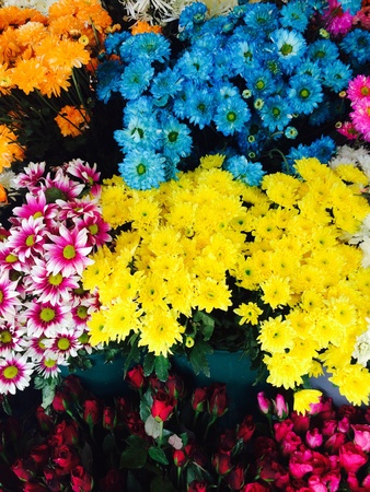 back: many color of chrysanthemum flower Stock Photo