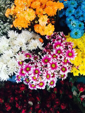 many color of chrysanthemum flower Stock Photo
