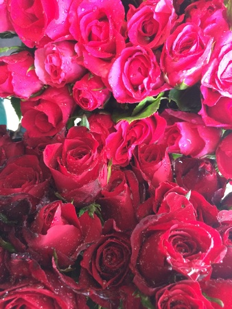 Red roses Valentines day background