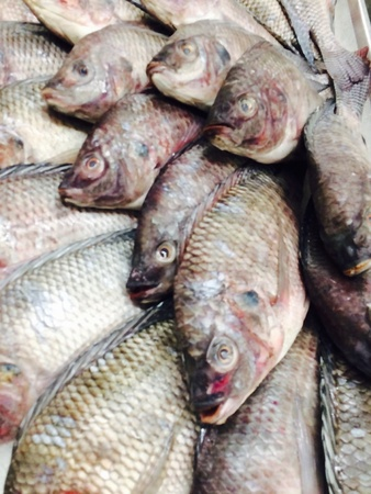 net: fresh fish sell in the market