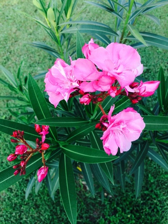 back: Pink flower blossom Stock Photo