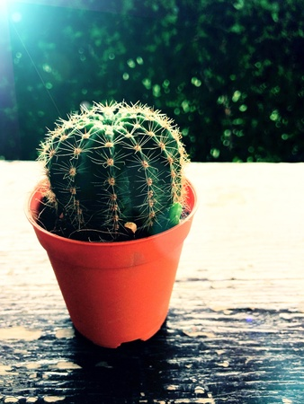 Cactus plant in flowerpot on wooden table Stock Photo