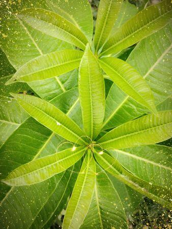 light  green tree leave