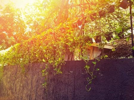 nature Tree climbing wall