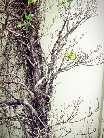 Dry tree branch, desolation concept