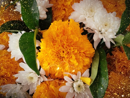 Marigold texture pattern background