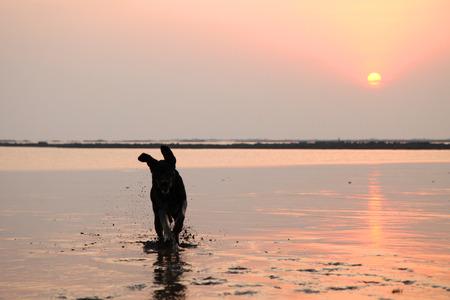 Silhouet van het Zwarte hond van Labrador spelen bij het strand