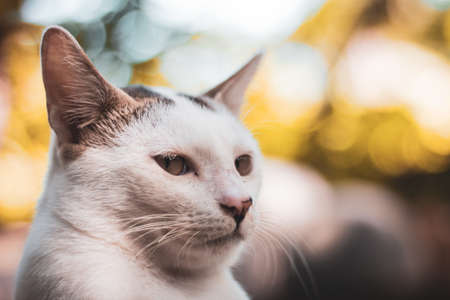 Close up photography of a white cat