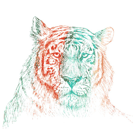 aggression: Face of tiger hand drawn Sketch on white background