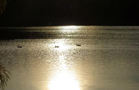 sch: 3 ducks in sunlight