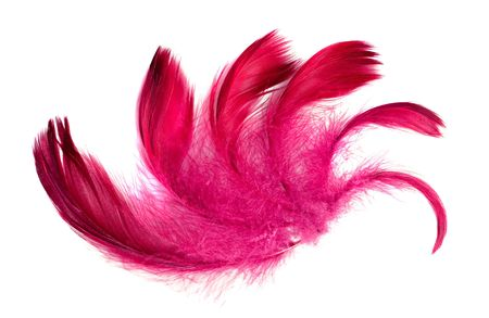 exotic soft beautiful feather on white background