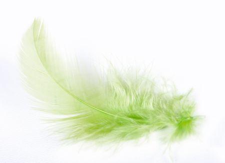 exotiques belle plume douce sur fond blanc Banque d'images