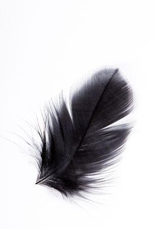 piuma bianca: esotica morbido bella piuma nero su sfondo bianco
