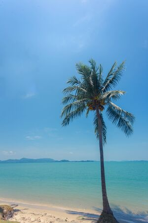Coconut tree with blue sky less cloud on background and seaside below, with light and more contrast - vertical