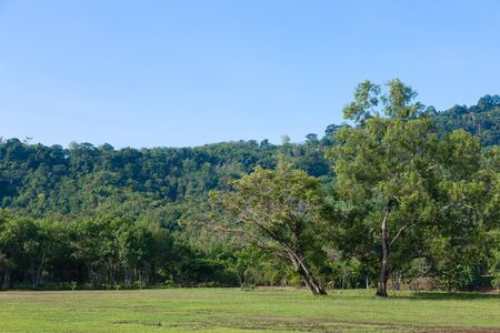 Big trees on the grass field and mountain on background in morning time with clear sky and weather Stock fotó
