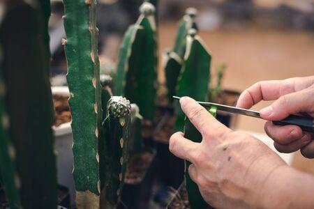 Cactus Genetic modify for make them bigger or more beautiful