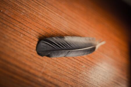 close up top of feather on wood table 版權商用圖片