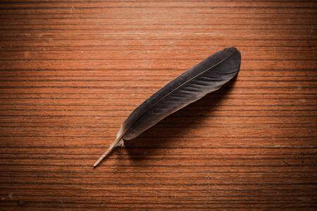 close up luxury black feather on wood table 版權商用圖片