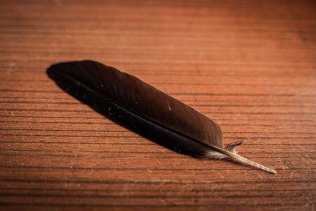 close up feather on wood table 版權商用圖片