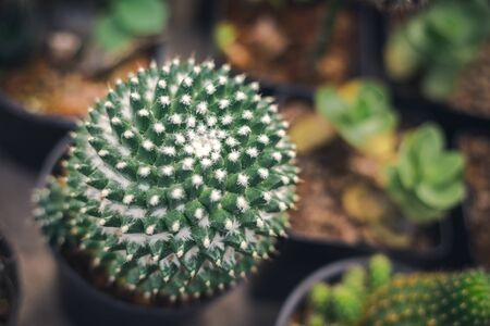 ball cactus with many white flora on body look like abit spiral to the top with another pot around