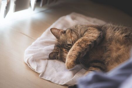 Sleeping cat on the towel on floor, hand cover its face from sun light at window in the room
