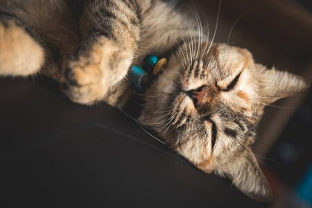 Closeup cat sleeping on pad of the chair, close eyes look cute