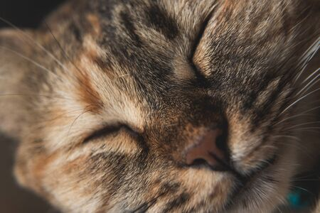 Macro closeup on cat face while sleeping, look cute when it close eyes, seem like smile, a bit soft blur