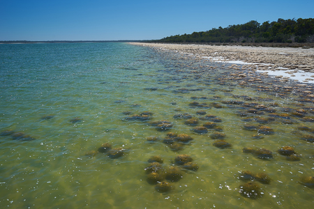Living fossils, Thrombolites at Lake Clifton, Western Australia