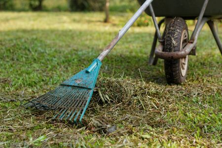 grass cutting: Plastic leaf rake and wheel barrow. In the midst of clearing the garden after grass cutting