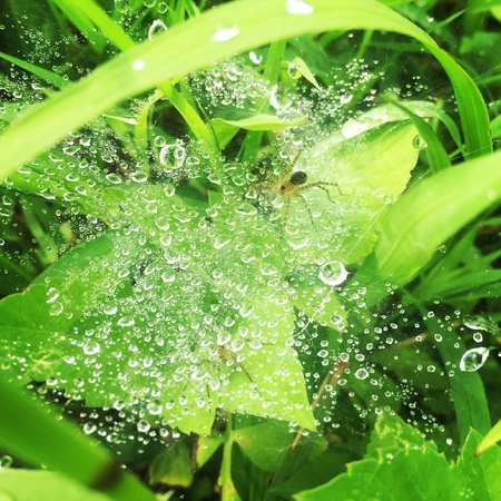 dewdrop: Morning dewdrop on spiderweb