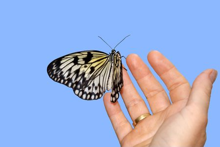 white butterfly sit in palm of wooman Stock Photo