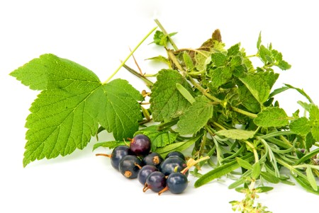 aromatic herbs with black currant against white background photo