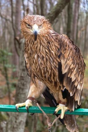 handle eagle sit on pole photo