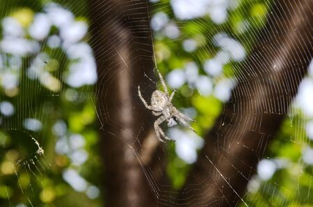 spider and spiderweb against foliage