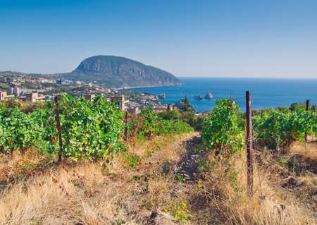 vineyard and villages in coast photo