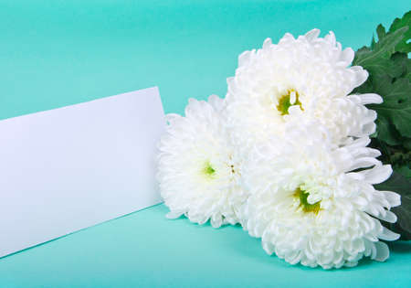 three white chrysanthemums and postcard on green background photo