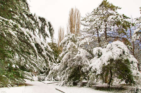 trees covered snow in park Stock Photo - 12035989