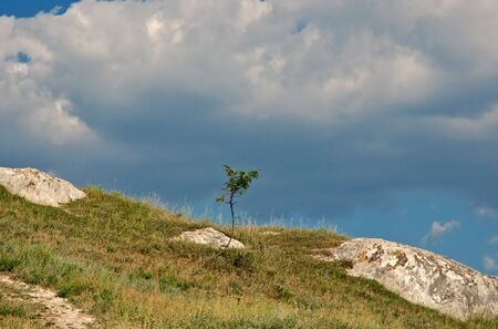 lonely tree in mountains against sky photo