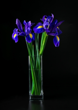 bouquet of iris in glass vase in dark photo