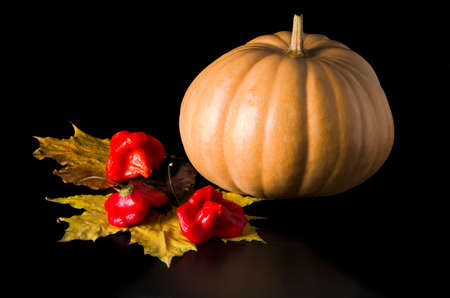 pumpkin with autumn leaves on dark background photo