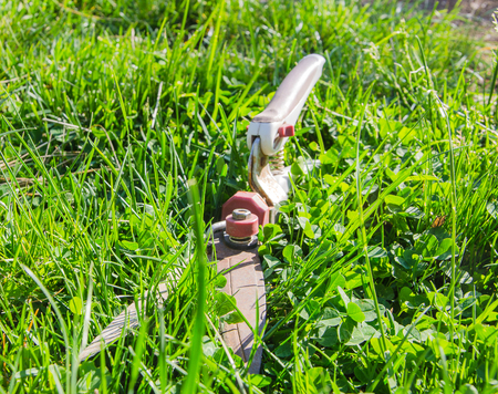 clippers: clippers on green grass in garden