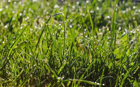 sward: grass with dew in morning forest Stock Photo