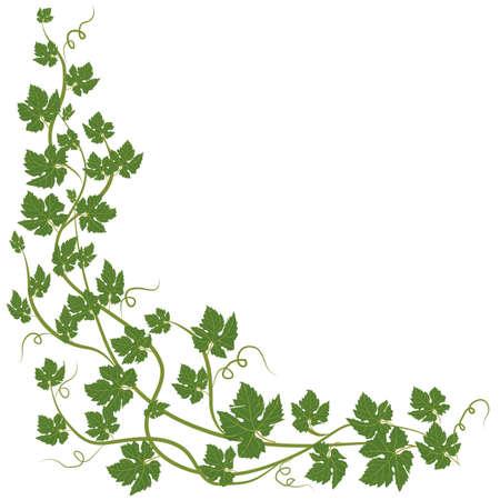vine leaves: frame with vine leaves on white background